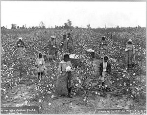 ga-cotton-field-library-of